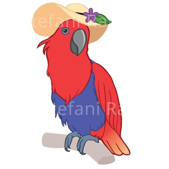 Eclectus parrot Illustration